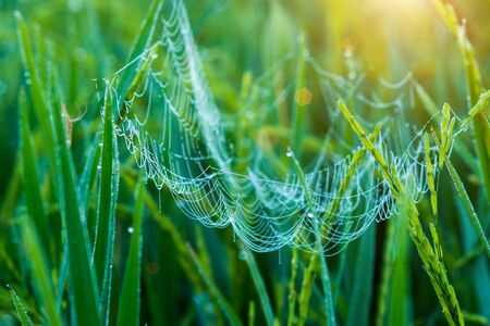 Close-up of cobweb with dew. photo
