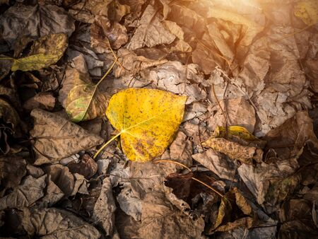 Brown fallen leaves laying on the ground. photo