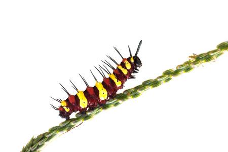 red and yellow caterpillar photo