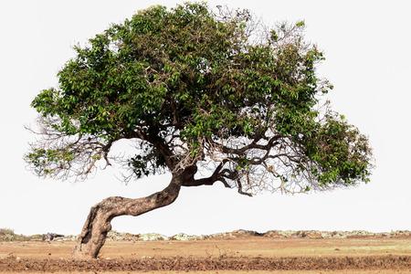 bended: tilt tree Stock Photo