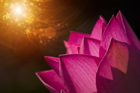 lotiform: beautiful lotus flower in blooming Stock Photo