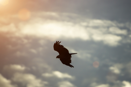gray herons: silhouettes of bird is flying Stock Photo