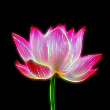 lotiform: Glow image of lotus on black background.