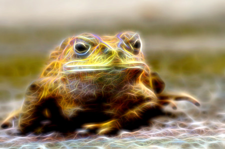 wart: Glow image of  Yellow Toad