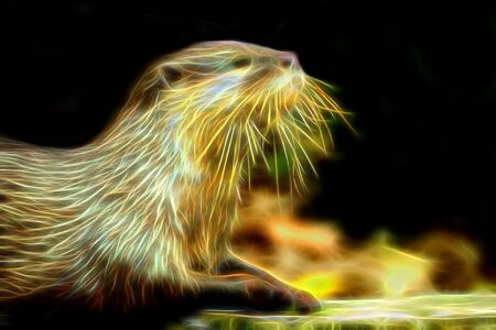 otter: Glow image of Smooth-Coated Otter
