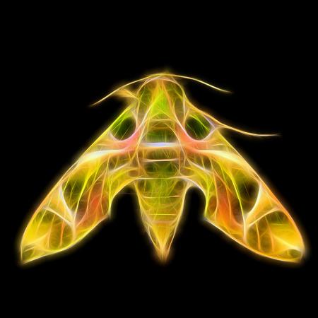 deilephila: Glow image of Oleander Hawk moth Stock Photo
