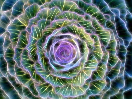 flowering kale: Glow image of cabbage