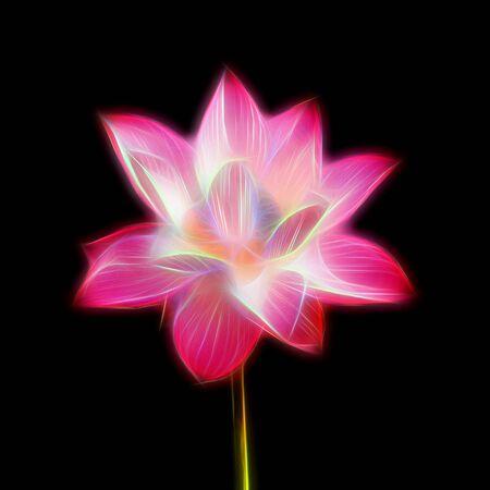 lotiform: Glow image of lotus flower in blooming Stock Photo