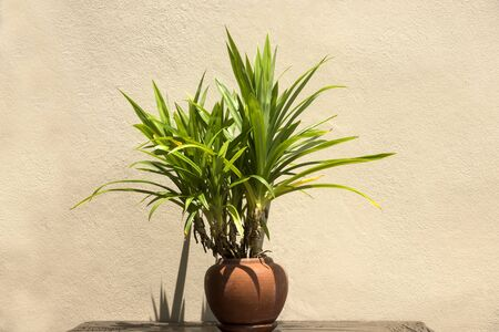 vase plaster: Trees in terracotta pots Stock Photo