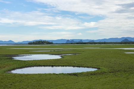 periyar: Wildlife sanctuaries of southern Thailand. (Wetland)