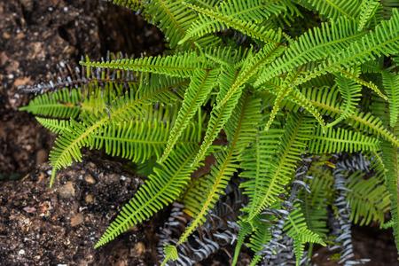 helechos: Helechos en la selva tropical
