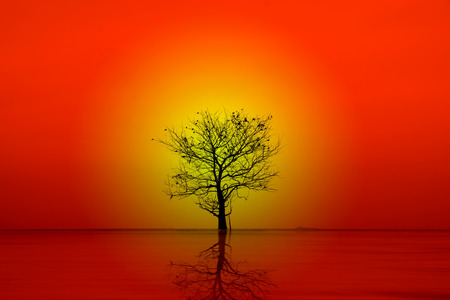 wizened: Silhouettes of dead trees on the lake. Stock Photo