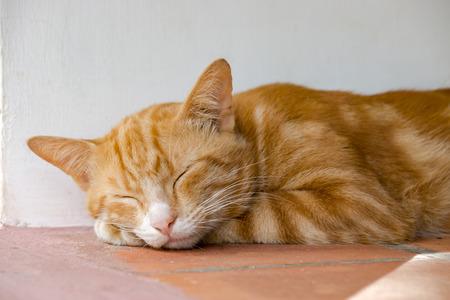 Yellow bengal cat are sleeping. Stock Photo