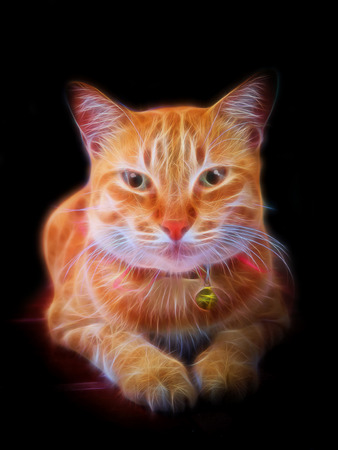 Glow image of Yellow bengal cat are looking.