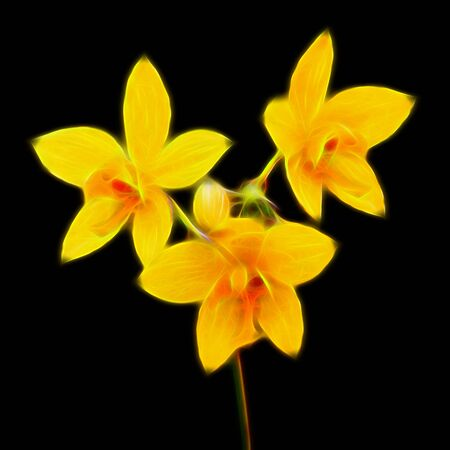 disclose: Glow image of Yellow Ground orchid on black background.