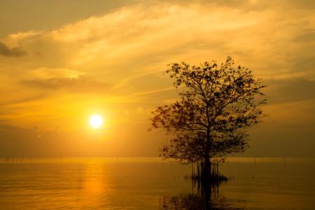 arboles secos: Siluetas de �rboles muertos en el lago.