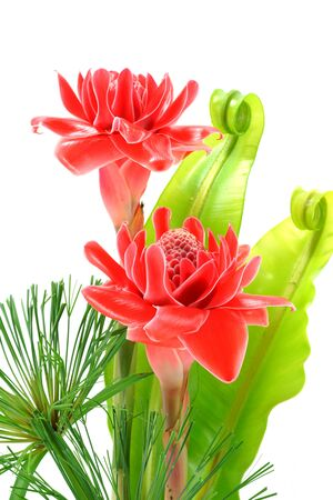 alpinia: beautiful tropical red ginger flower Stock Photo