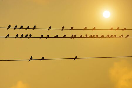siluetas: silhouettes of common swallows on power lines and sun.