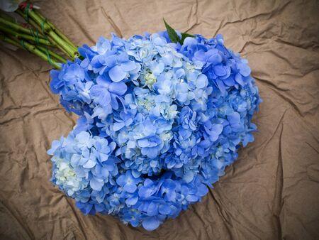 hydrangea flower: Blue Hydrangea flower. Stock Photo