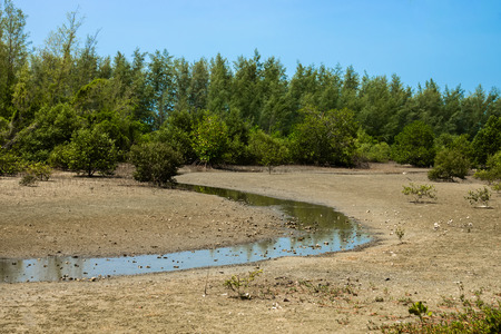 the topical: Mangrove forest topical rainforest for background, Ta lum pook promontory of Thailand.