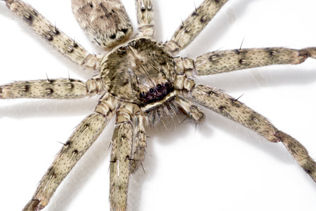 Close-up image of House spider long legs. Stock Photo