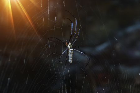 pholcus: Spider in the dark with light.