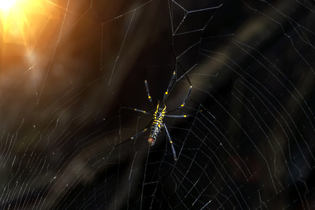 Under of spider in the dark with light. Stock Photo