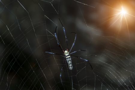 Spider in the dark with light.