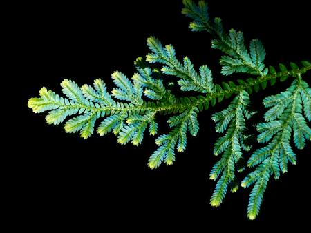 chlorophyll: Green fern background. Stock Photo