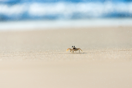 reversing: Ghost crab running on the beach with Spindrift of the sea. Thailand.