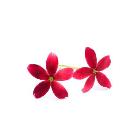 suckle: Rangoon creeper flower. (Quisqualis indica) Stock Photo