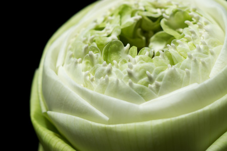 effloresce: Close up Decorative white lotus flower in thai style. Idea: soft focus image and use for background.