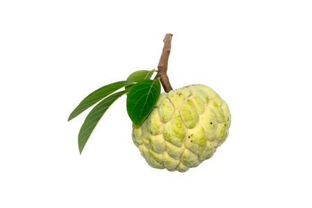 Sugar apple fruit on white background. (Annona squamosa Linn.)