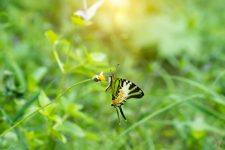 Butterfly perched on flower grass in the green nature background with light.