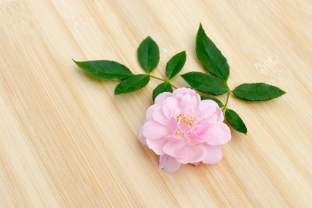 The pink fairy rose flower with leaf on the bamboo wood. Stock Photo