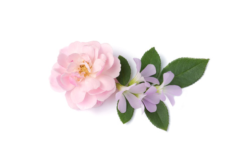The bouquet of pink fairy rose and Oxalis flower with leaf on white background. Stock Photo