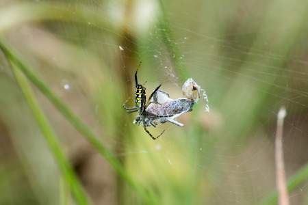 a spider is captive to its prey in its network