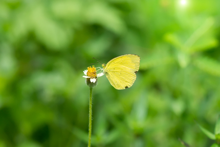 Butterfly perched on flower grass with green nature background.