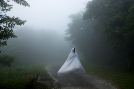 wilds: White Ghost on the road in the forest with mist. Stock Photo