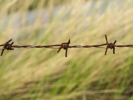 prohibido el paso: Cerca de los viejos alambre de púas. Foto de archivo