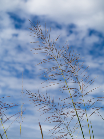 Flower grass in summer with sky background.