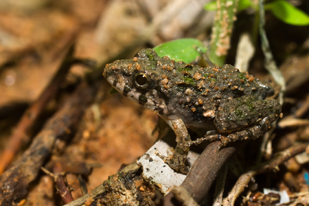 webfoot: A baby toad are sitting on the ground.