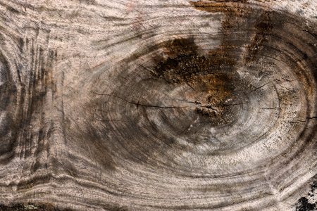 wood surface: Old wood surface background.
