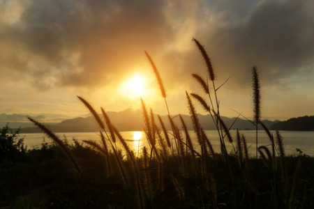 limp: Silhouettes of flower grass in the morning with sunrise.
