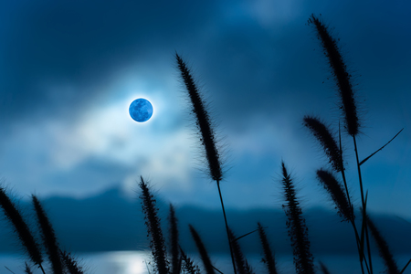 limp: Silhouettes of flower grass in the moonrise. Stock Photo