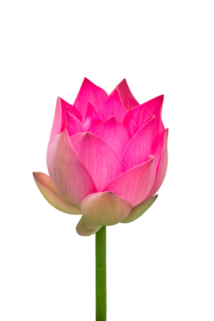 lotus flower on isolate white background with clipping path. Stock Photo