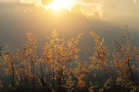 Flower grass with sunlight.