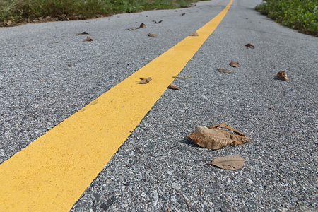 yellow traffic lines with dry leaf on the ground. Stock Photo