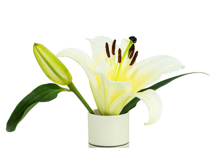 lily in the glass on a white background