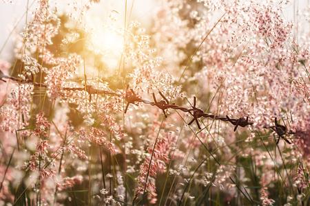 Soft pink flower grass with sunlight.